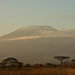 Amboseli, view of Kilimangaro