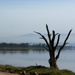 Nakuru lake and a dead tree